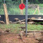 30 pheasants 2016